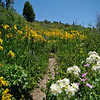 Path among the wildflowers: Wildflowers from the Uinta and Wastach mountains of Utah