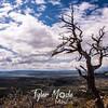 726  G Mesa Verde View Snag S