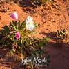 916  G Desert Flowers