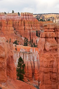 Tree within Bryce Canyon