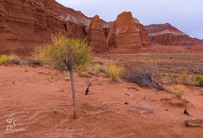 Tiny Tree in Cathedral Valley