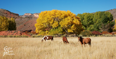 Horses of Capitol Reef
