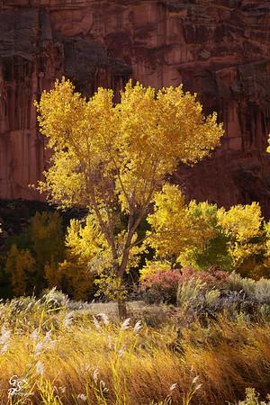 Tall Yellow Tree