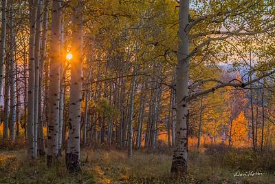SunburstTrees1_sig