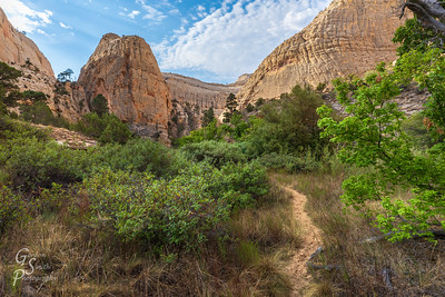 Trail in Death Hollow Canyon