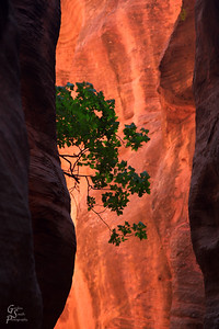 Hanging on the canyon wall