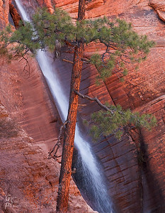 Pine Trees with Waterfall