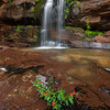 Tiny Red Flowers and Zion Waterfall
