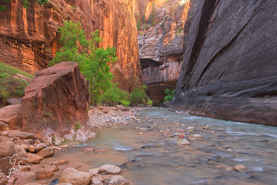 Zion Narrows Hike up the canyon and in the Virgin River.