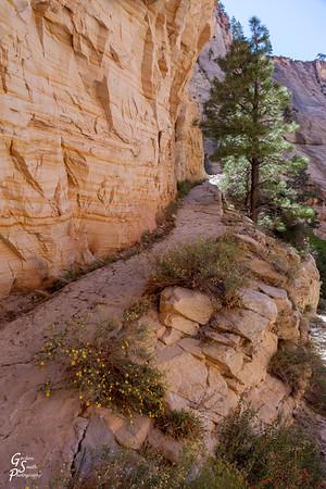 West Rim Trail Path