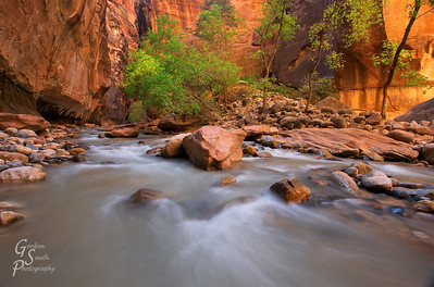 Rocks in the Zion Narrows endlessly trip up hikers.  They also reflect lovely golden red light from the higher canyon walls.  A grove of green-turning-yellow trees stands beside the river.