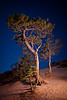 Lone Night<br /> <br /> Bryce Canyon National Park, Utah, USA
