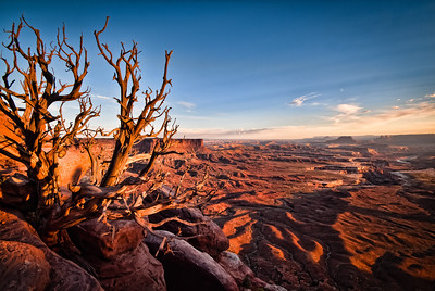 Lone Tree Overlook at Sunset  Colors shift as the sunsets over the Green River Green River Overlook, Island in the Sky, Canyonlands, Utah, USA