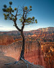 Lone Tree Vigil<br /> <br /> Overlooking the valley of hoodoos, this lone tree stands vigil.<br /> Bryce Canyon National Park, Utah, USA