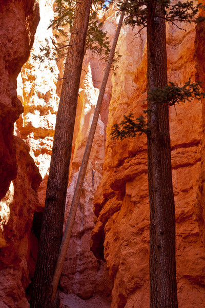 Wall Street in Bryce Canyon