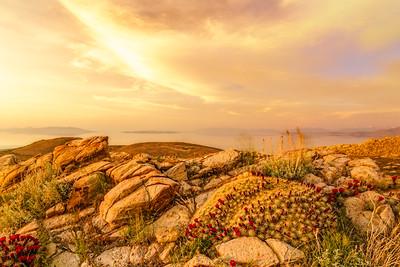 Stansbury Island and Massive Claret Cup Cactus