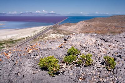 it can survive @ Great Salt Lake, Utah