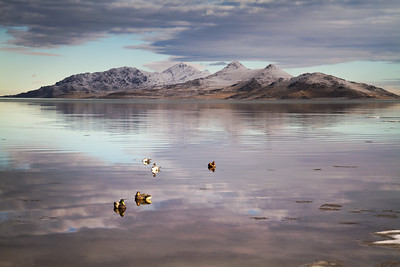 decoys @ Great Salt Lake, Utah