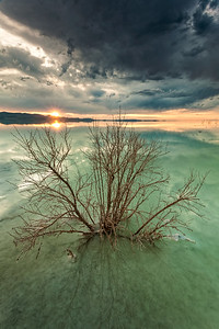 Salty bush