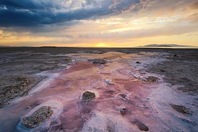 Beautiful Pink Desolation