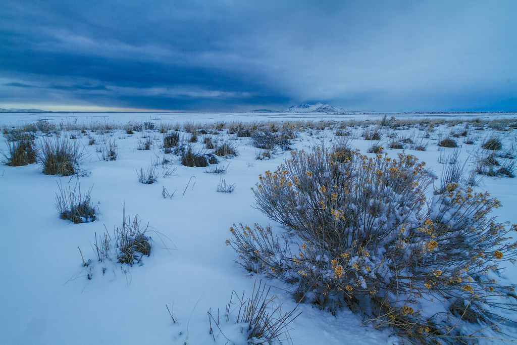 Rabbit brush and winter storm at the Great Salt Lake