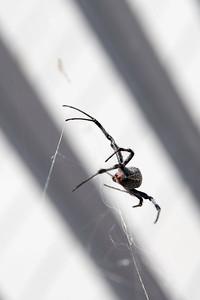 Antelope Island Spiderfest 2017-6