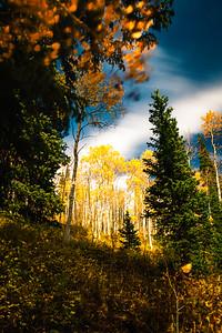 fall colors Big Cottonwood canyon