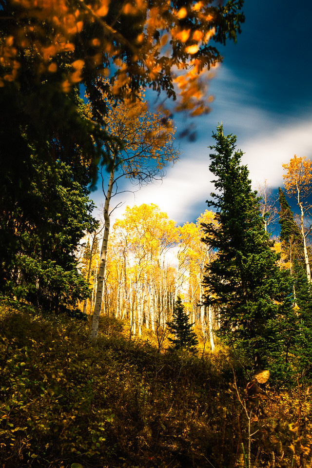 fall colors Big Cottonwood canyon