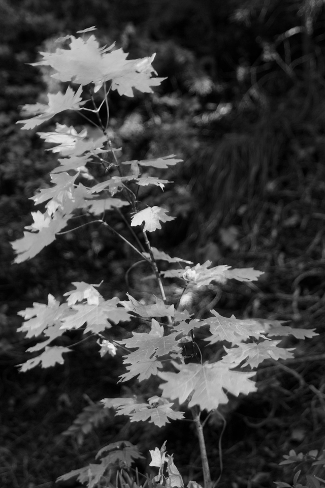 a little fall color B&W