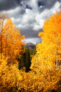 Fall in Big Cottonwood Canyon