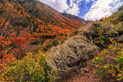 Fall colors have arrived in Big Cottonwood canyon