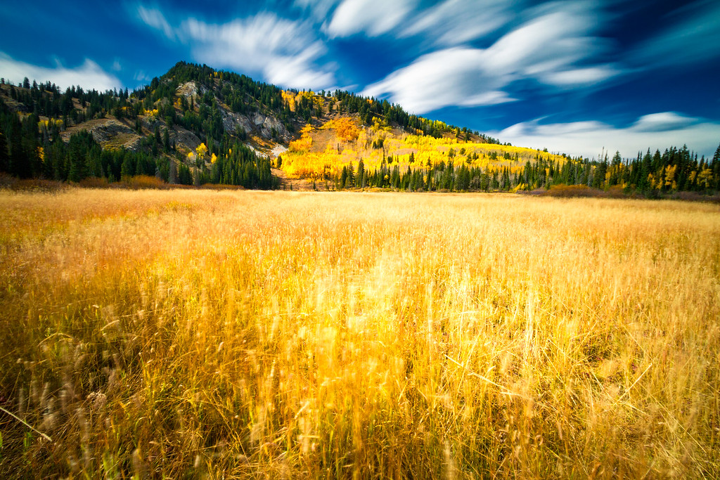 amber waves of grass