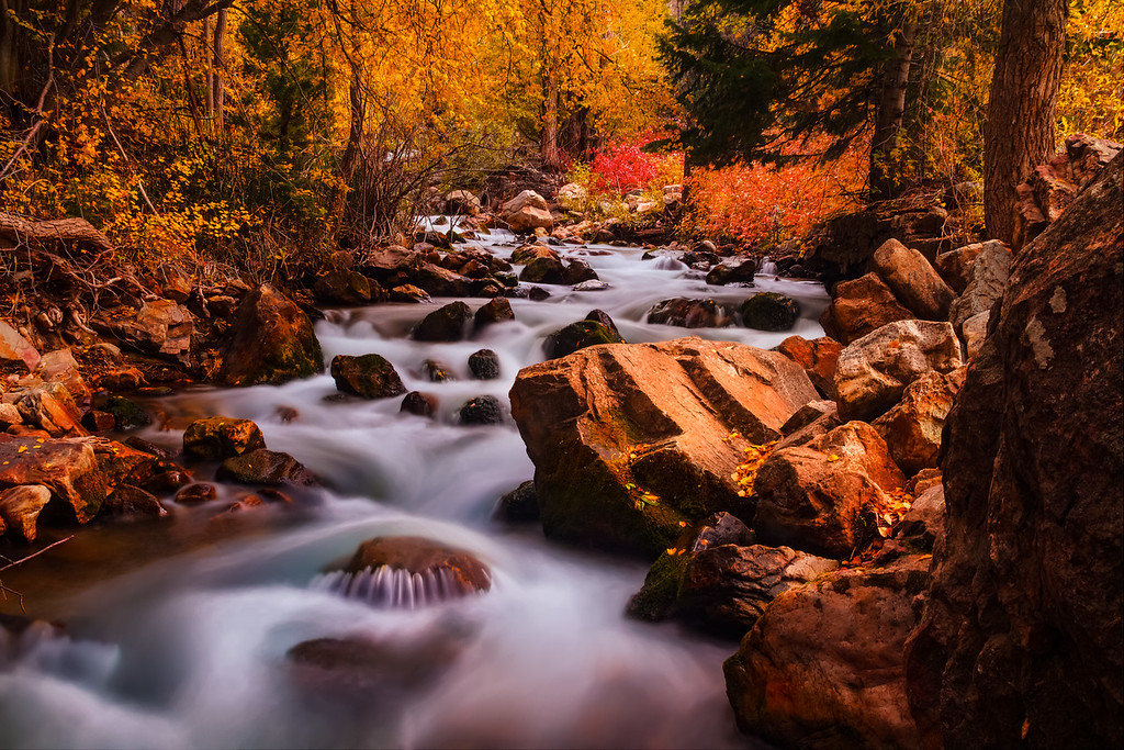 Fall colors along Big Cottonwood Creek