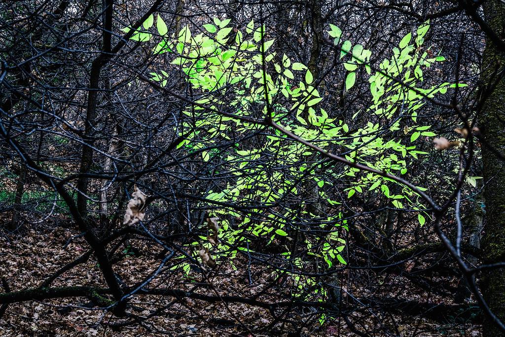 spot of green