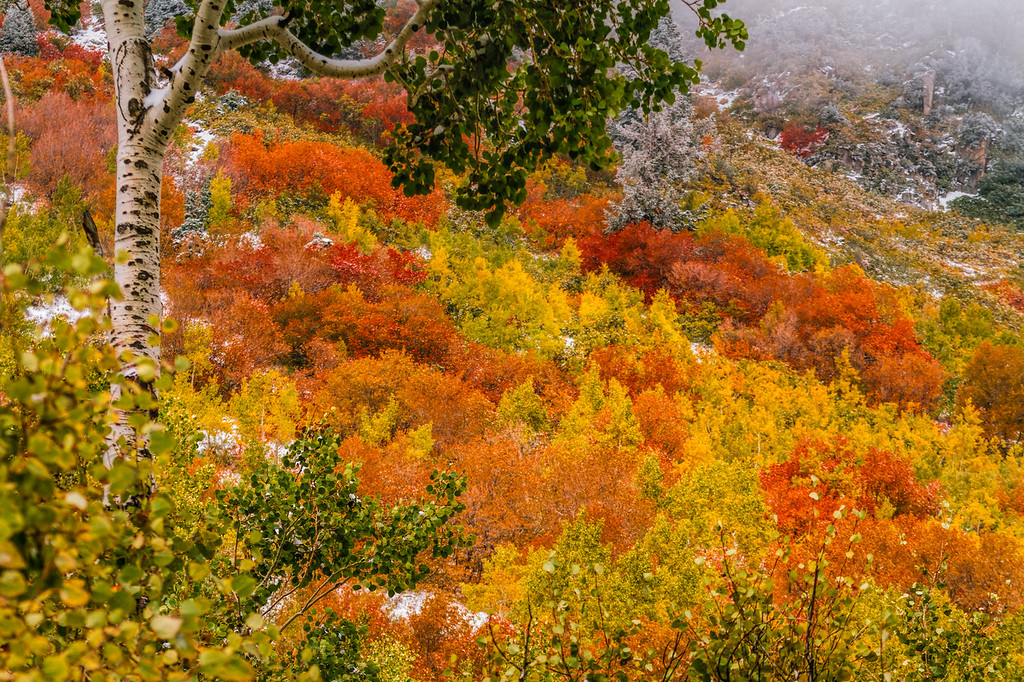 Fall in Little Cottonwood canyon