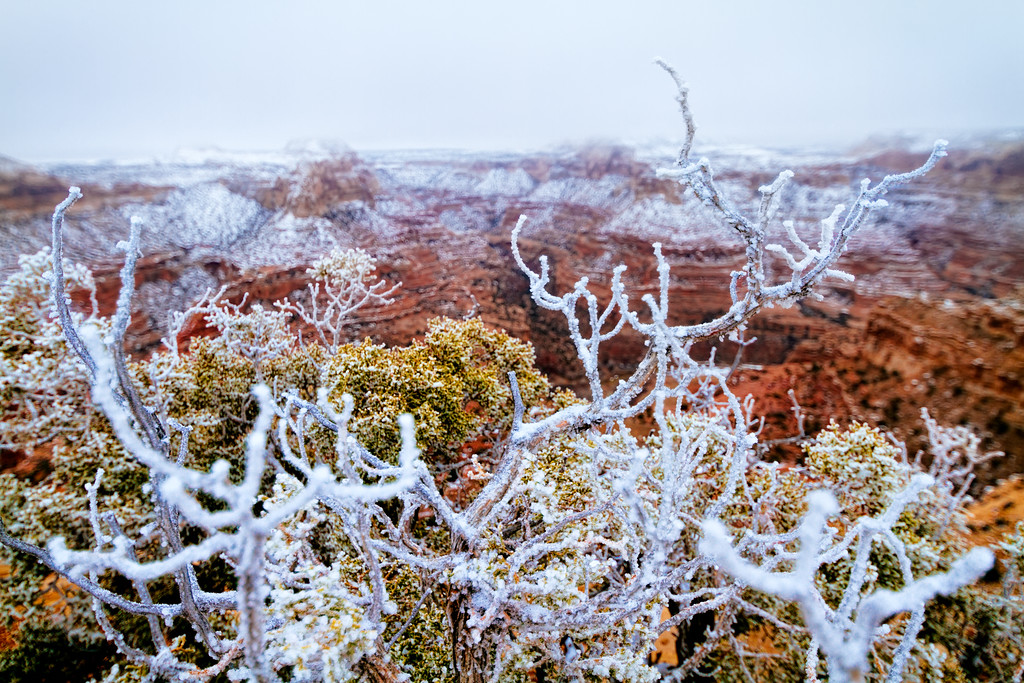 Frosty Wedge