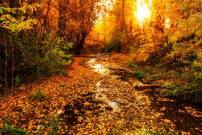 Nicholls Park's Bair Creek