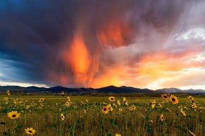 Virga and Sunflowers