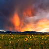 Virga and Sunflowers