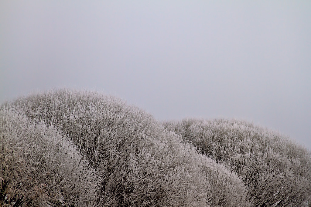 fog and frost