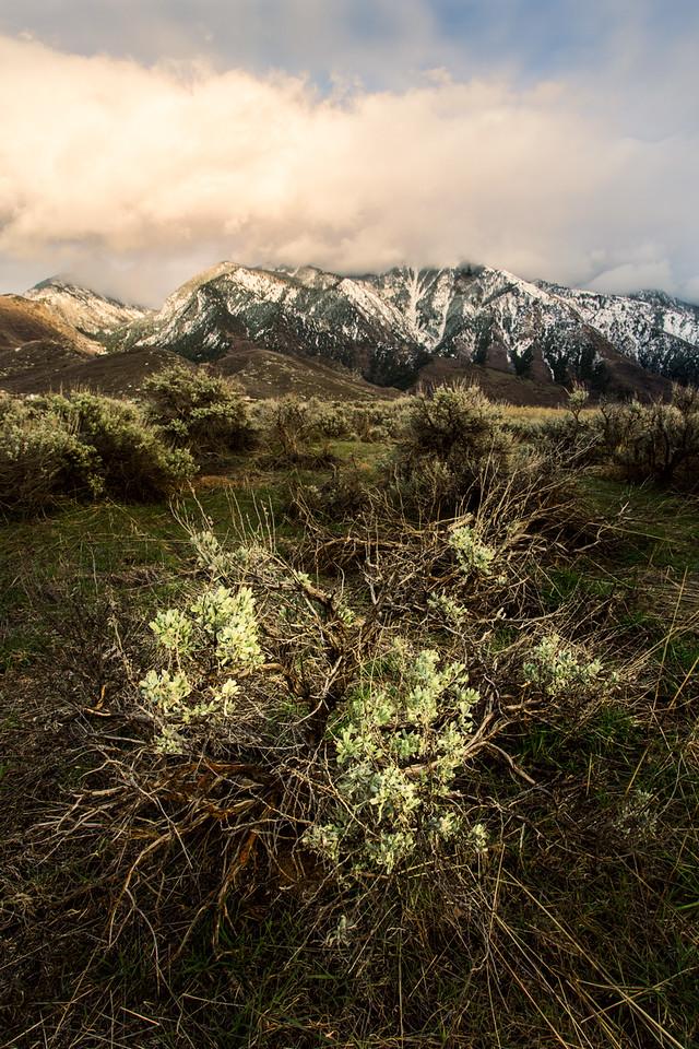 Sage and Lone Peak