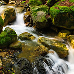 """Flowing Stream and Mossy Rocks"" Lovely green ferns and moss everywhere. I shot these just after a big rainfall in the spring. Uvas Canyon Creek Waterfalls in Santa Clara County near San Jose.  It looks like it could be a waterfall and stream from Oregon.  DSC_282"