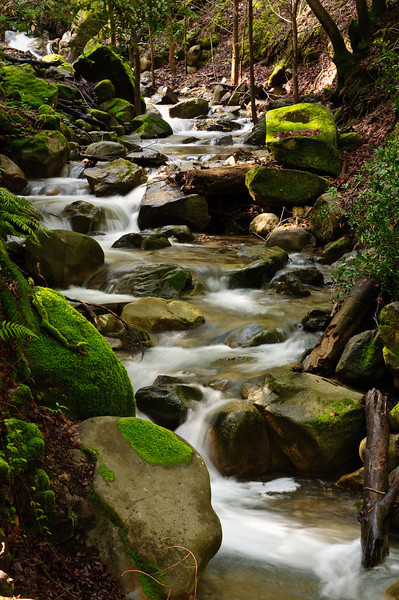 Lovely green ferns and moss everywhere.  I shot these just after a big rainfall in the spring.  Uvas Canyon Creek Waterfalls DSC_2819