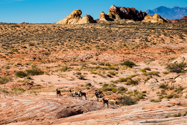Valley of Fire/Red Rock Canyon Oct. 2016