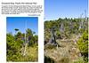 10  Shorepine Bog