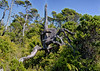 12  Shorepine Bog HDR