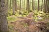 Brandywine Forest