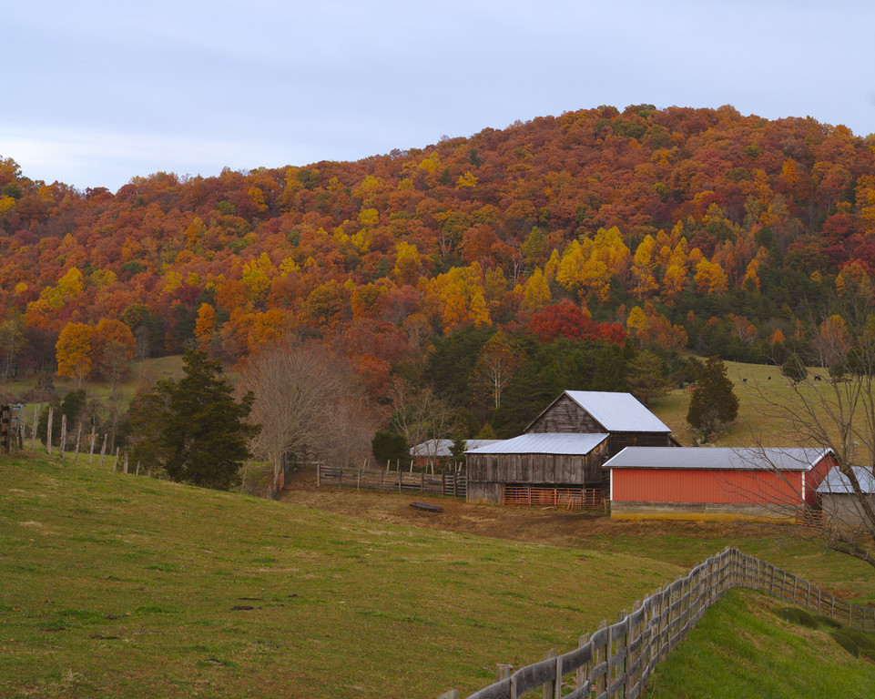 Photograph showing the colors of Autumn in Virginia