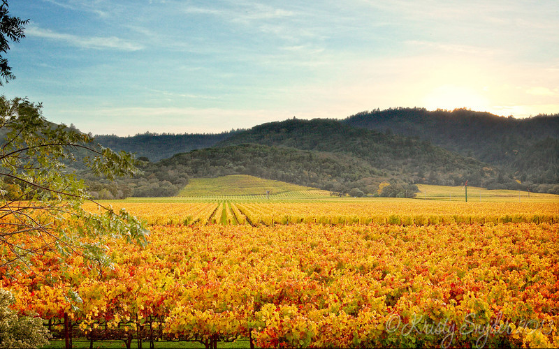 A cool vineyard that my uncle scoped out that morning.   Love how the trees are turning yellow, orange, and red.