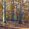 Great Swamp, NJ - Nov 2011